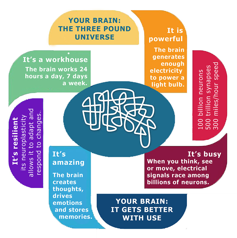 Brain Facts - Healthy Brains by Cleveland Clinic