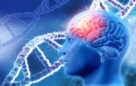 Multi-Domain Approach to Memory Loss Called 'Right Track' By Researcher