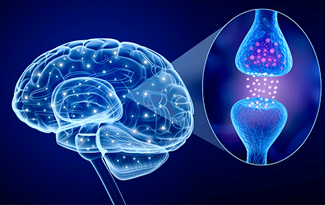 High-Fat Diet Seen Lowering Brain Function